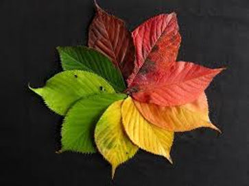fall leaves in rainbow circle.jpeg