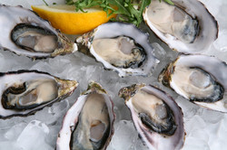 Fresh oysters Provincetown