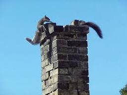 Squirrels getting into a chimney