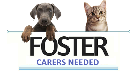 FosterCarersNeeded-1.png