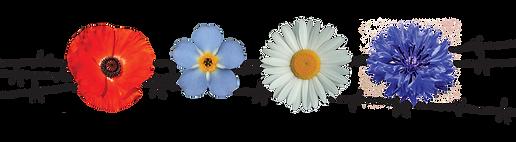 Gedenkblumen Vergissmeinnicht Poppy