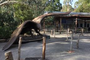 オーストラリア メルボルン ヒールズヴィル自然保護区(ヒールズヴィル・サンクチュアリー)