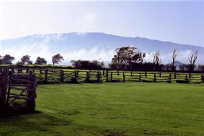 ハワイ ハワイ島 パーカー牧場