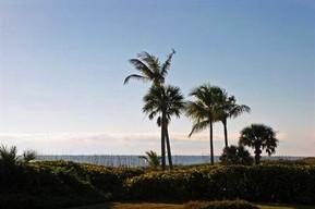 アメリカ フロリダ サニベル島