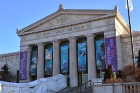 アメリカ シカゴ シェッド水族館