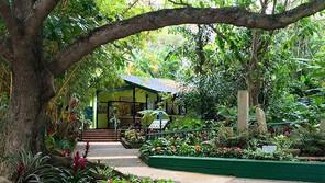 ハワイ オアフ島 フォスター植物園