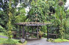 ハワイ ハワイ島 ハワイ・トロピカル・ボタニカル・ガーデン