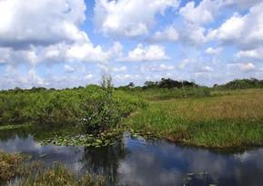 アメリカ フロリダ エバーグレーズ国立公園