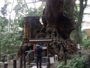 日本 静岡県 熱海 来宮神社