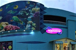メキシコ カンクン インターアクティブ水族館