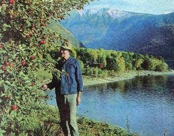 Яблони на террасе