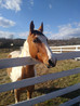 Pine, First Valor Farm Equine Therapy Horse