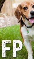Beagle Freedom Project