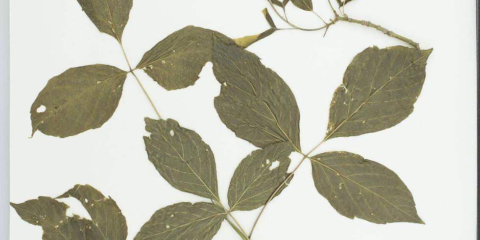 The Mid-Atlantic Herbaria Consortium