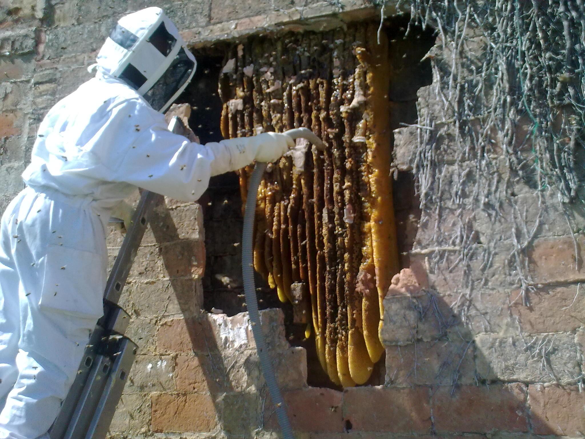 Eixam d'abelles impresinant