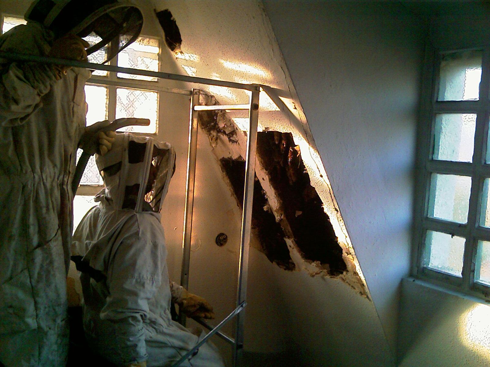 Trabajos verticales con abejas (1).jpg