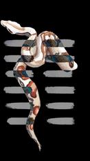 Snake copy.PNG
