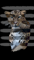 jaguar copy.PNG