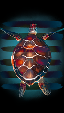 turtle copy 2.PNG