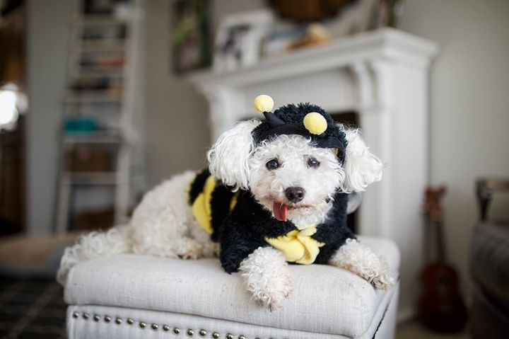 _I don't care if it's Halloween, I am NOT going in public looking like this!_ Lucy Lou the Bumblebee