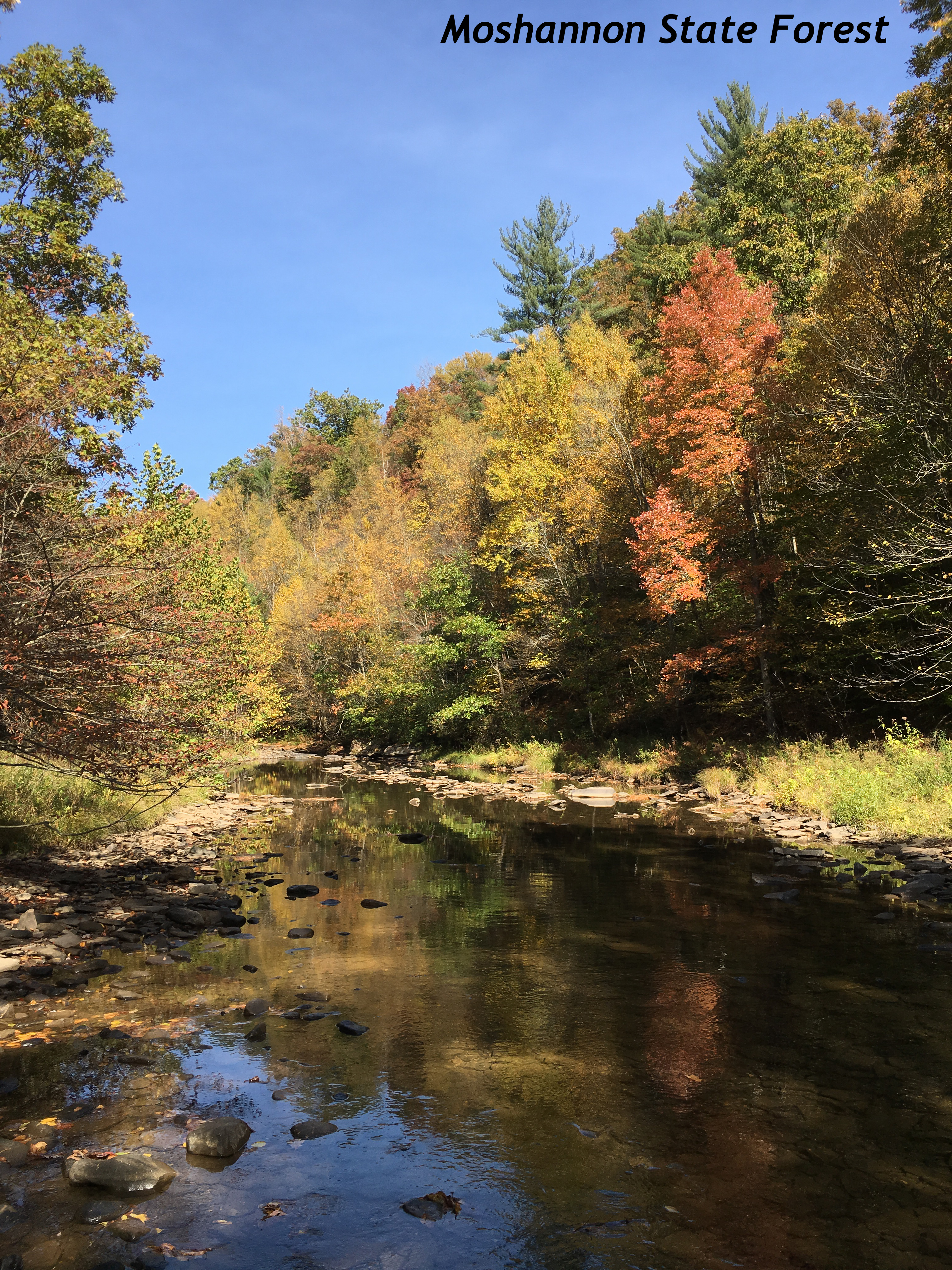 moshannon-state-forest