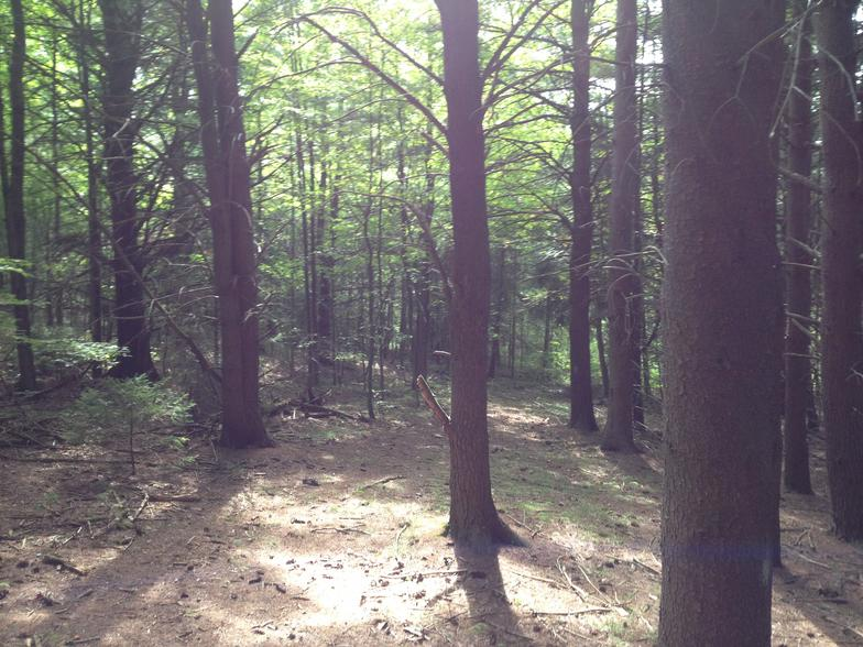 state-forest1-ny