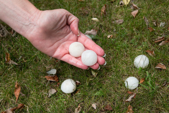 a hand holding large pieces of hail from a storm