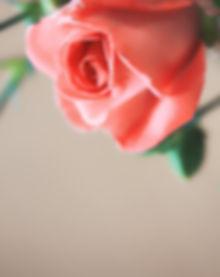 AllureMD rose.jpg