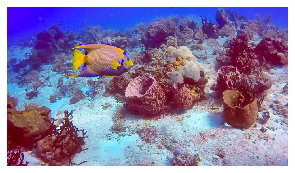 cozumel_paradise_reef
