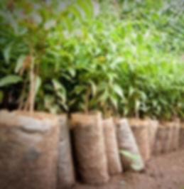 seedling-innovation-1-292x300.jpg
