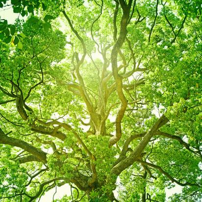 Magical Luminous  Tree