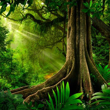 Mother Trees.jpg