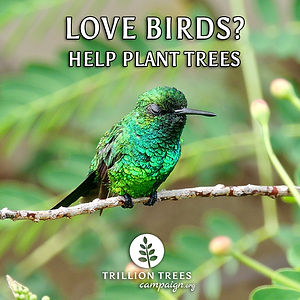 Love Birds? Help Plant Trees - Meme.jpg