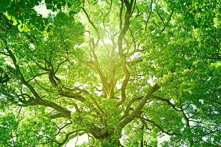 Magic Tree Original Size.jpg