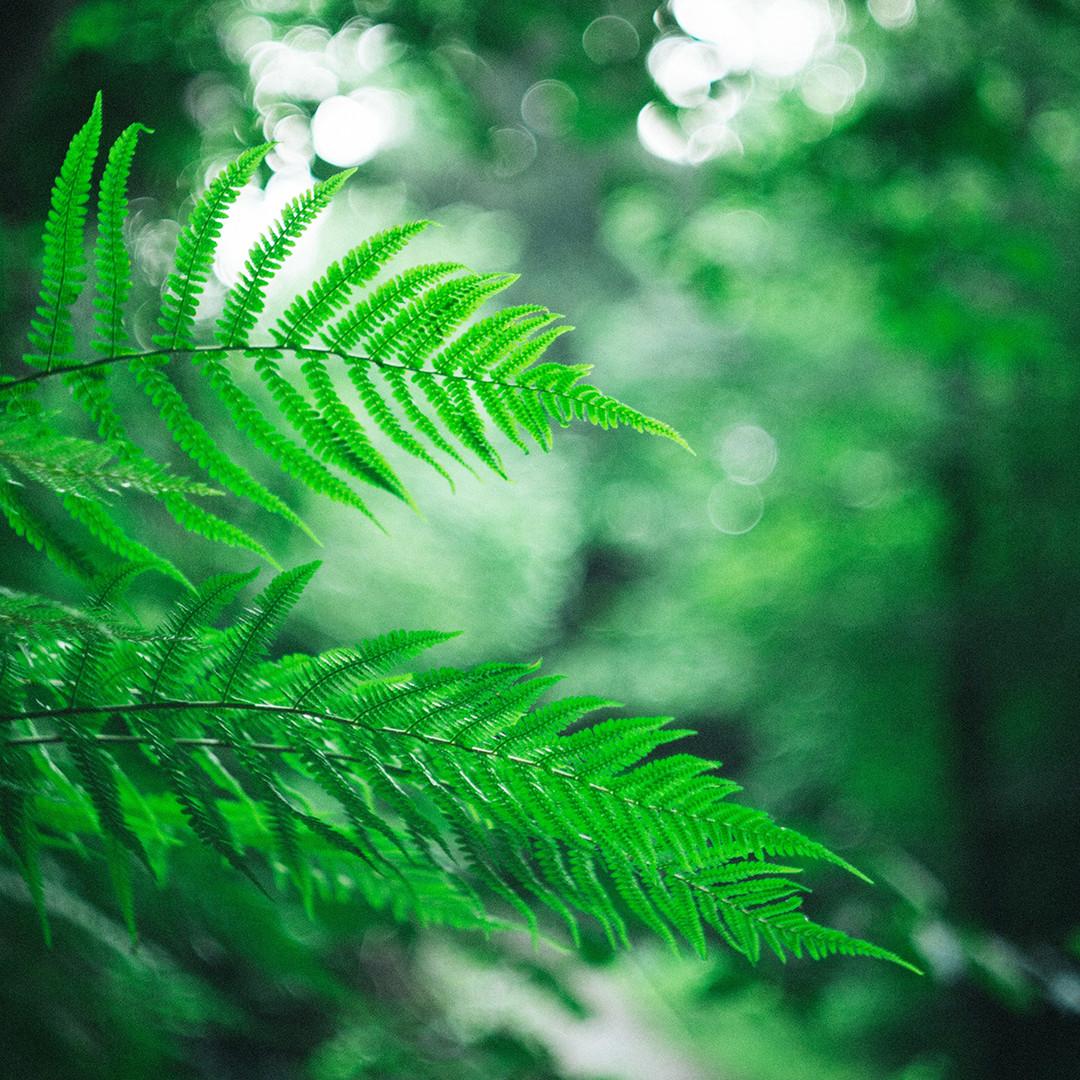 Love Ferns? Help Plant Trees