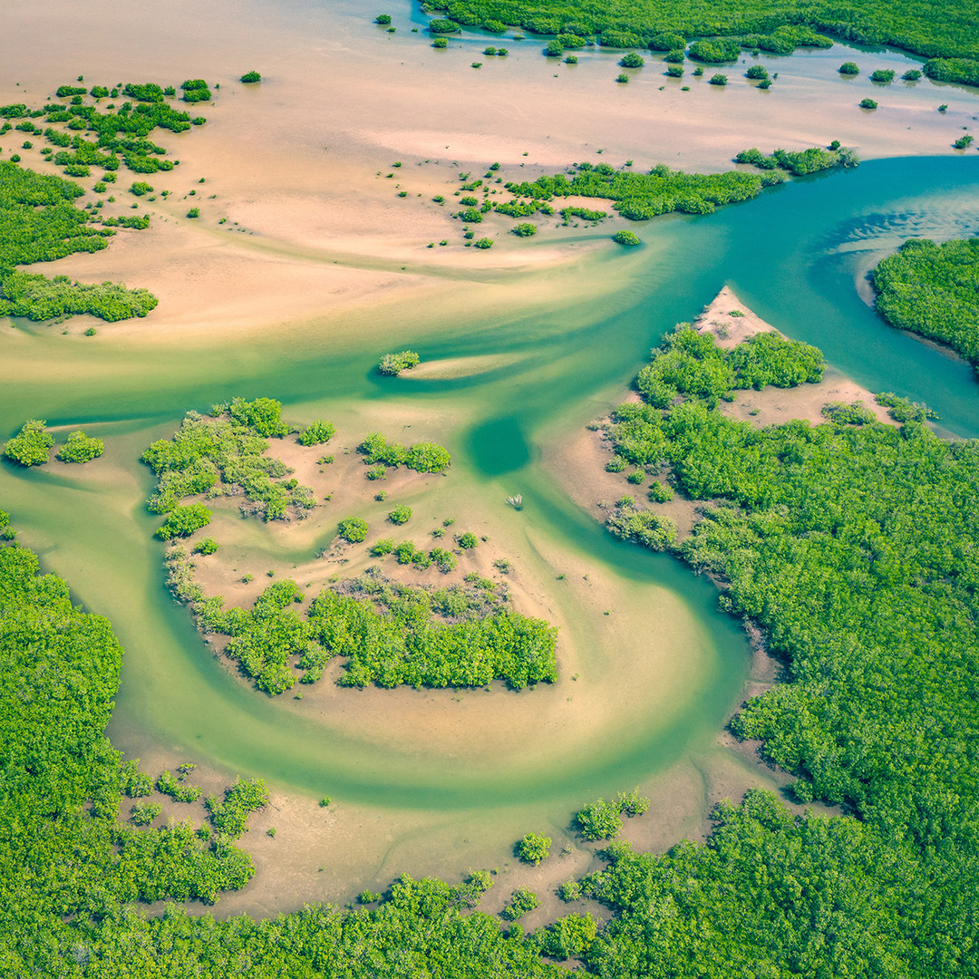 Aerial View of Mangrove Forests