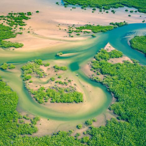 Mangroves Instagram.jpg