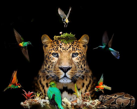 Jaguar's Dream to Fly - TTC Web Footer.p