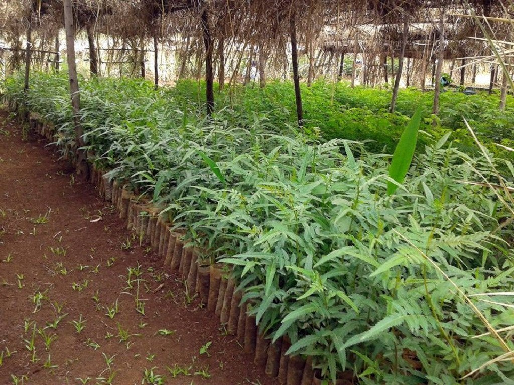 Uganda - Trees for the Future