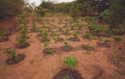 forest-garden-grid-phase-one-300x190.jpg