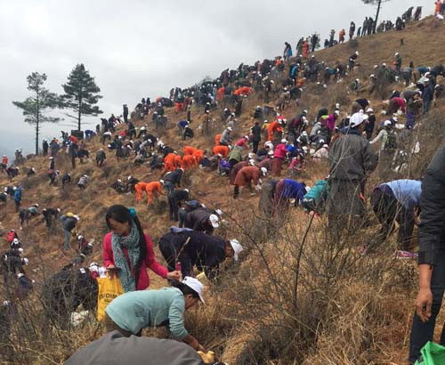 Source:http://www.ecosnippets.com/environmental/bhutan-planted-108000-trees/