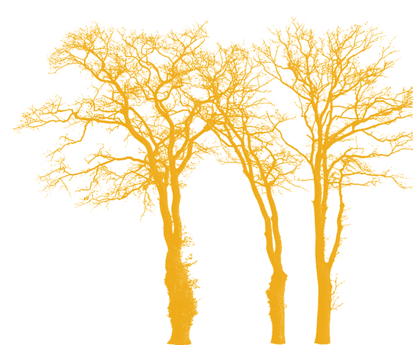 three golden trees_right.png