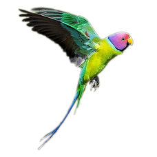 Parrot Flying.png