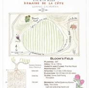 Bloom's Field (DDLC)