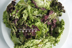 生菜  Lettuce