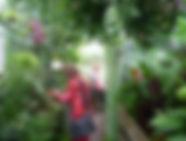 tropische-kas-rondleiding.jpg