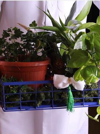 كأن تختار مجموعة من النباتات الخضراء التي تجعل المكان مليئًا بالحياة و الأمل.  رابط المتجر: