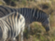 Wildlife , conservation-South Africa  stae-sa.com
