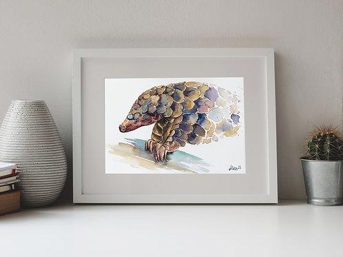 Pangolin Watercolor 23x31cm