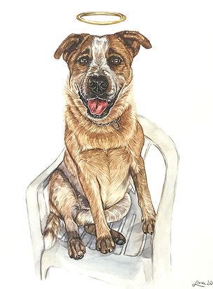 homenagem cachorro